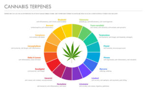 Terpenes and Their Applications